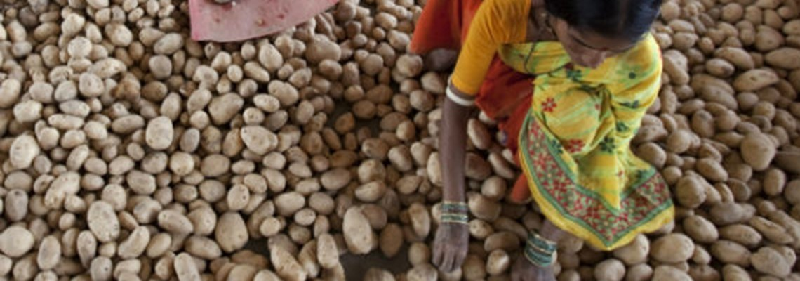 India's Agricultural Markets
